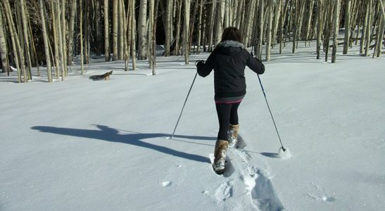 Snowshoe Hiking in Flagstaff, Ariz.