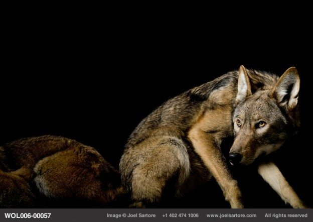 Joel Sartore ~ National Geographic Photographer