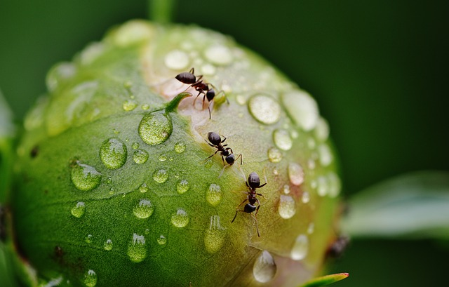 3 tips to get rid of ants for good | AZ